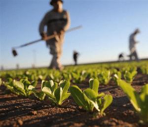 Usucapione terreno agricolo come diventare proprietario